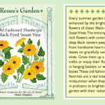 FRIDAY FLOWERS: BLACK-EYED SUSAN VINE
