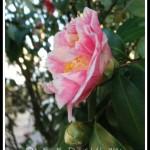 FRIDAY FLOWERS: IN SAVANNAH