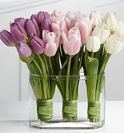 TULIPS: MY FAVORITE FLOWER