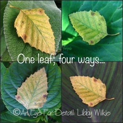 One leaf four ways_wm