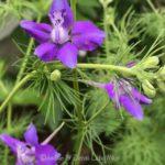 FRIDAY FLOWERS: SAVING FLOWER SEEDS