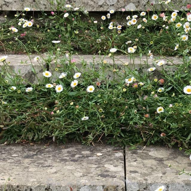 Garden Design Elements friday flowers: elements of english garden design - an eye for detail