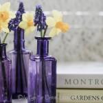FRIDAY FLOWERS: DAFFODILS