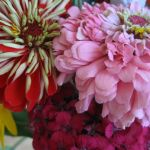 FRIDAY FLOWERS: COLOR!