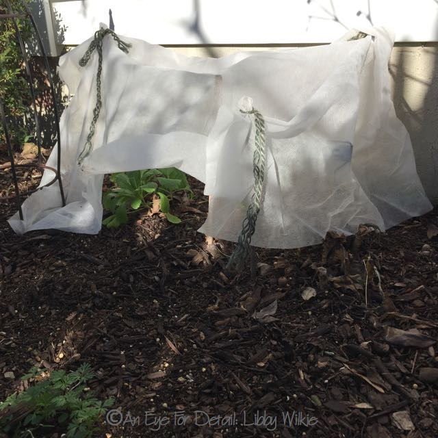 ... We Had Prolonged Cold Spells Here (below 20° For Several Nights  Running.) So Last Year I Bought The. All Purpose Garden Fabric From  Gardeners Supply