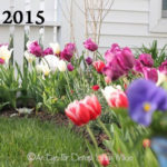 FRIDAY FLOWERS: TULIP TIME!